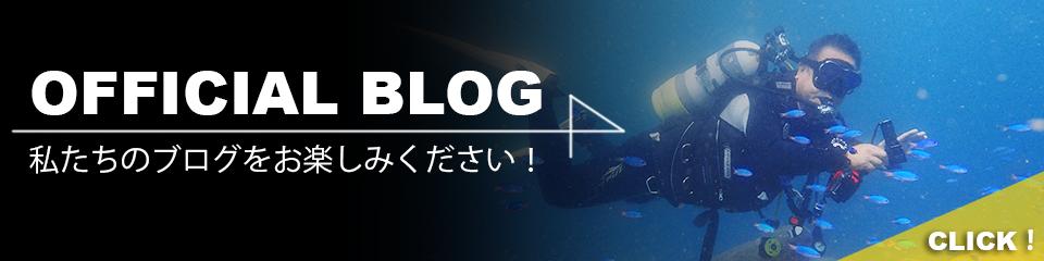 ブログをご覧ください!
